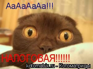 Котоматрица: АаАаАаАа!!! НАЛОГОВАЯ!!!!!!