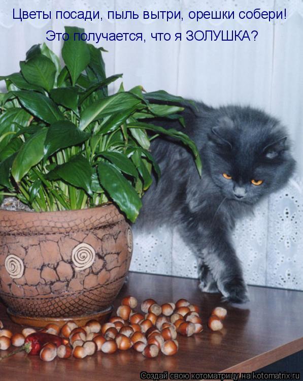 Котоматрица: Цветы посади, пыль вытри, орешки собери! Это получается, что я ЗОЛУШКА?