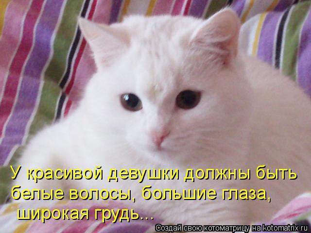 Котоматрица: У красивой девушки должны быть  белые волосы, большие глаза,  широкая грудь...