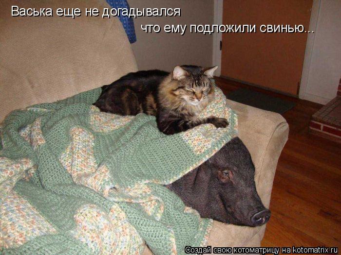 Котоматрица: Васька еще не догадывался  что ему подложили свинью...