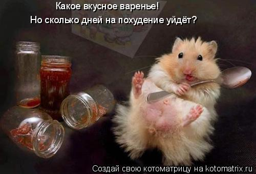 Котоматрица: Какое вкусное варенье! Но сколько дней на похудение уйдёт?