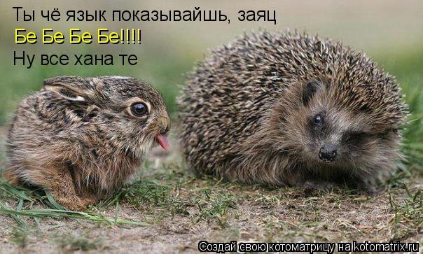 Котоматрица: Ты чё язык показывайшь, заяц Бе Бе Бе Бе!!!! Ну все хана те