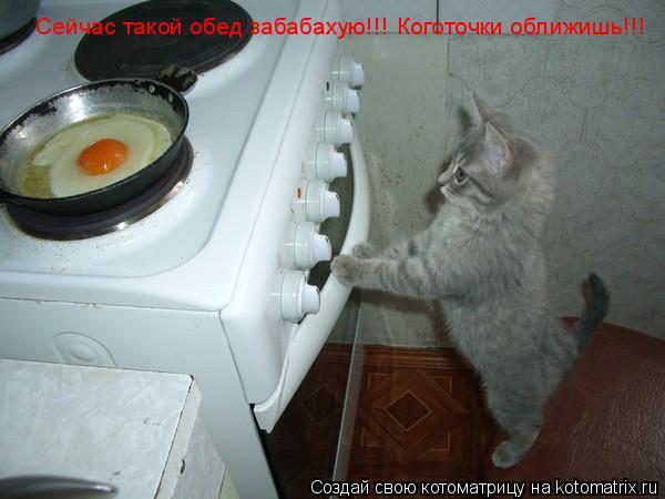 Котоматрица: Сейчас такой обед забабахую!!! Коготочки оближишь!!!