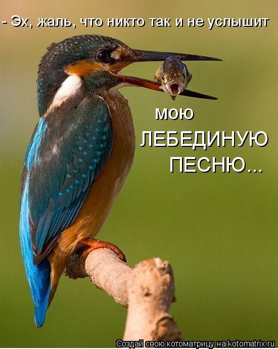 - Эх, жаль, что никто так и не услышит мою ЛЕБЕДИНУЮ ПЕСНЮ...