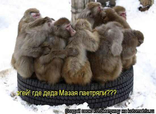 Котоматрица: эгей! где деда Мазая паетряли???