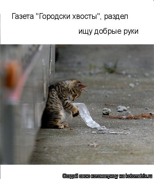 """Котоматрица: ищу добрые руки Газета """"Городски хвосты"""", раздел"""
