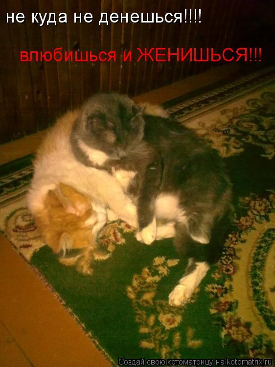 Котоматрица: не куда не денешься!!!! влюбишься и ЖЕНИШЬСЯ!!!