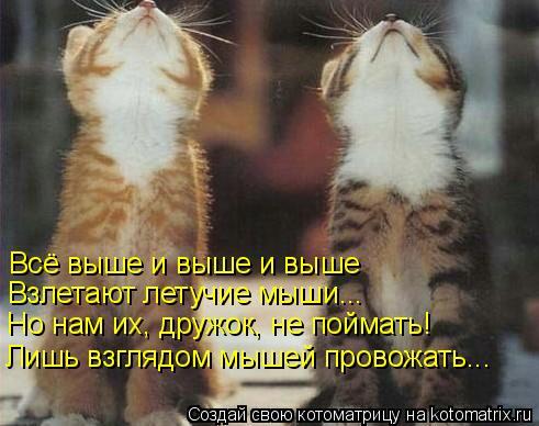Котоматрица: Всё выше и выше и выше Взлетают летучие мыши... Но нам их, дружок, не поймать! Лишь взглядом мышей провожать...