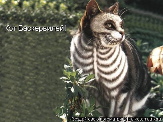 Котоматрица: Кот Баскервилей!