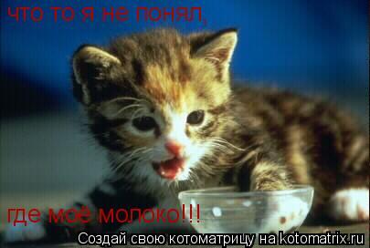 Котоматрица: что то я не понял, где моё молоко!!!
