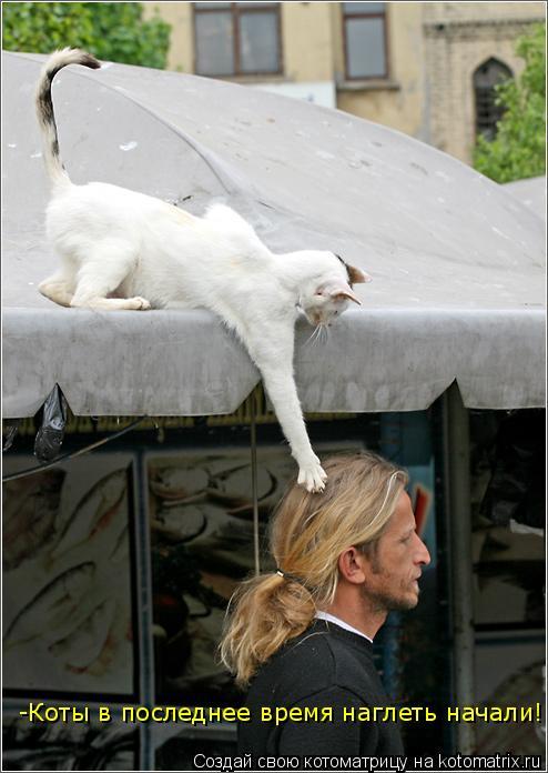 Котоматрица: -Коты в последнее время наглеть начали!