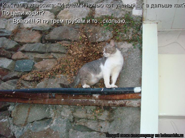 """Котоматрица: Как там у классика: """"И днем и ночью кот ученый...."""" а дальше как? По цепи ходит? Враки!!! Я по трем трубам и то...скользю...."""
