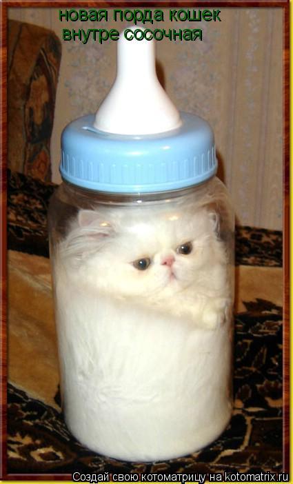 Котоматрица: новая порда кошек внутресосочная новая порда кошек  внутре сосочная