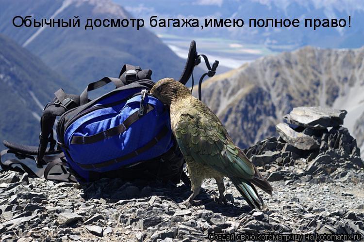 Котоматрица: Обычный досмотр багажа,имею полное право!