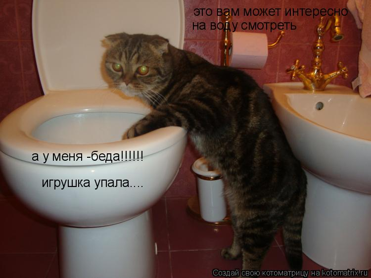 Котоматрица: это вам может интересно  на воду смотреть  а у меня -беда!!!!!! игрушка упала....