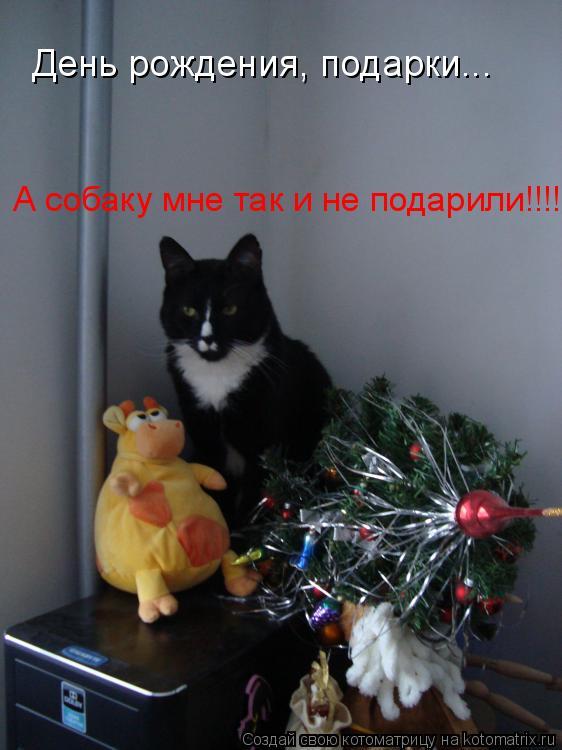 Котоматрица: День рождения, подарки... А собаку мне так и не подарили!!!!