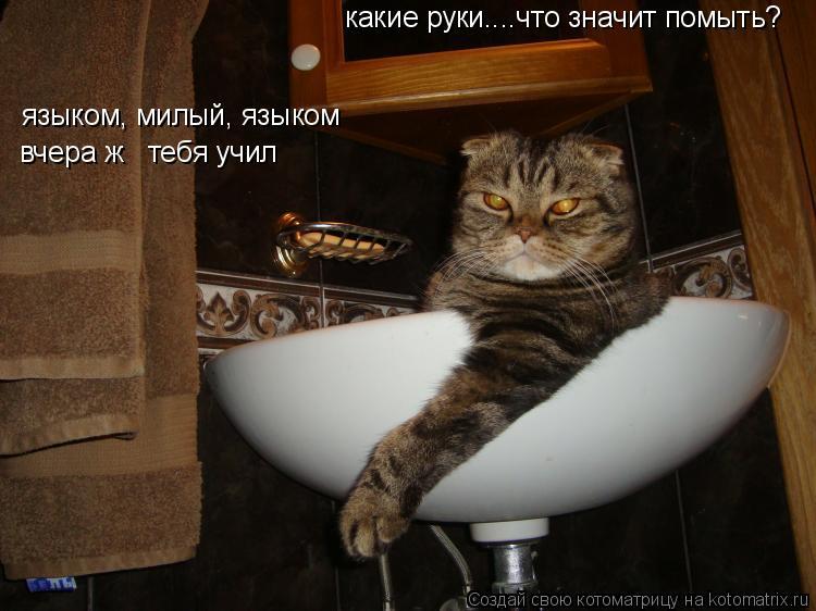 Котоматрица: какие руки....что значит помыть? языком, милый, языком вчера ж   тебя учил