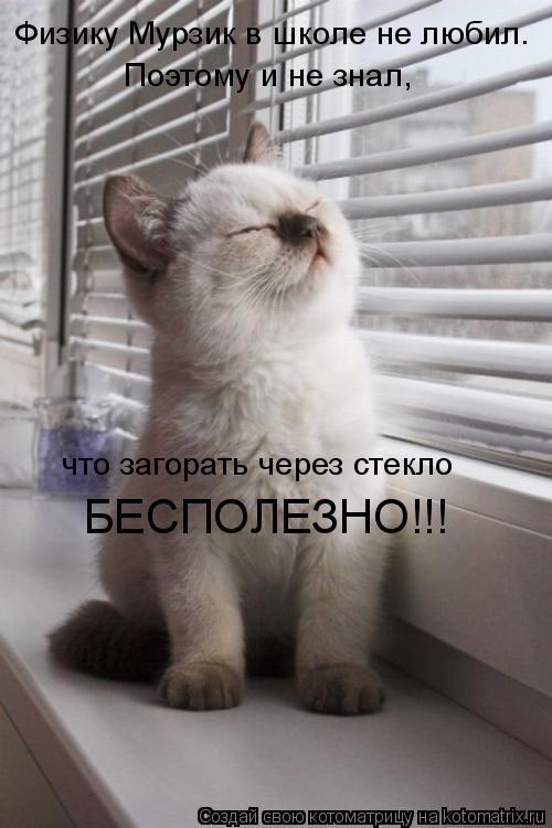 Котоматрица: Физику Мурзик в школе не любил. Поэтому и не знал, что загорать через стекло БЕСПОЛЕЗНО!!!