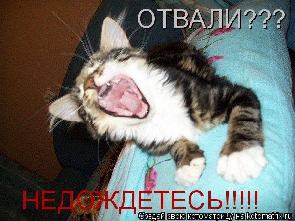 Котоматрица: НЕДОЖДЕТЕСЬ!!!!! ОТВАЛИ???
