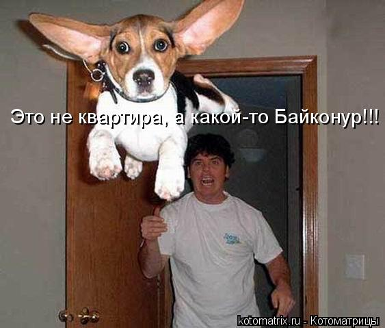 Котоматрица: Это не квартира, а какой-то Байконур!!!