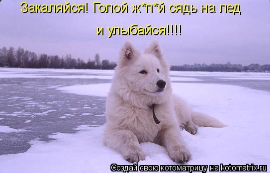 Котоматрица: Закаляйся! Голой ж*п*й сядь на лед и улыбайся!!!!