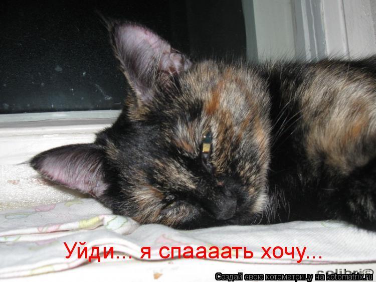 Котоматрица: Уйди... я спаааать хочу...
