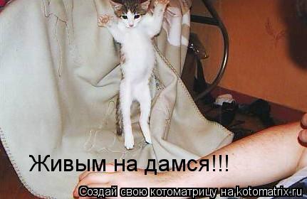 Котоматрица: Живым на дамся!!!