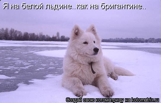 Котоматрица: Я на белой льдине..как на бригантине..