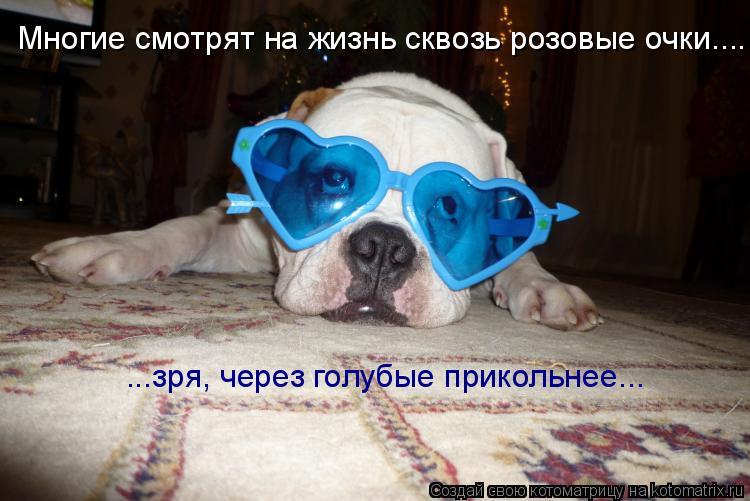 Котоматрица: Многие смотрят на жизнь сквозь розовые очки.... ...зря, через голубые прикольнее...