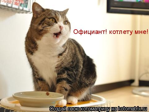 Котоматрица: Официант! котлету мне!
