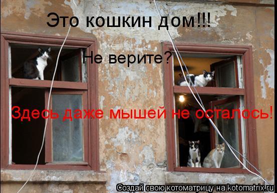 Котоматрица: Это кошкин дом!!! Не верите? Здесь даже мышей не осталось!