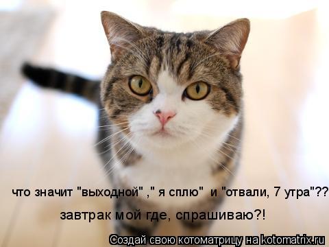 """Котоматрица: завтрак мой где, спрашиваю?! что значит """"выходной"""" ,"""" я сплю""""  и """"отвали, 7 утра""""??"""