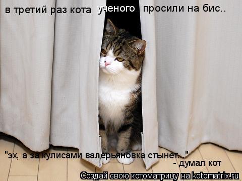 """Котоматрица: в третий раз кота  ученого просили на бис.. """"эх, а за кулисами валерьяновка стынет..."""" - думал кот"""
