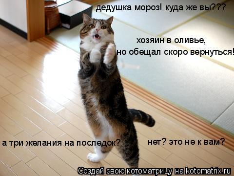 Котоматрица: дедушка мороз! куда же вы??? хозяин в оливье, но обещал скоро вернуться! а три желания на последок? нет? это не к вам?
