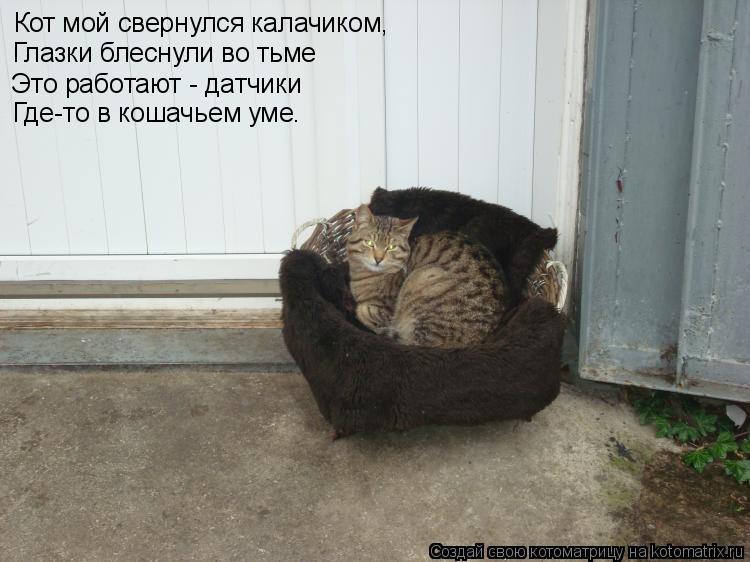 Котоматрица: Кот мой свернулся калачиком, Глазки блеснули во тьме Это работают - датчики Где-то в кошачьем уме.