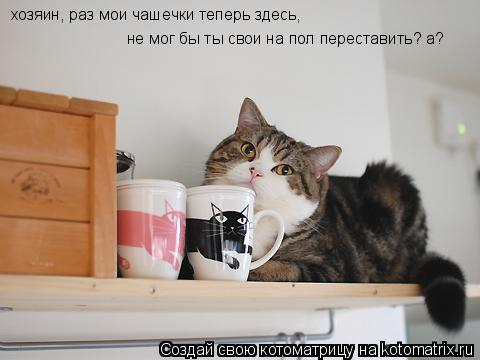 Котоматрица: хозяин, раз мои чашечки теперь здесь, не мог бы ты свои на пол переставить? а?