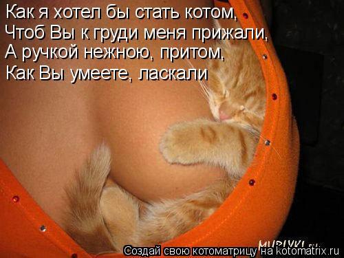 Котоматрица: Как я хотел бы стать котом, Чтоб Вы к груди меня прижали, А ручкой нежною, притом, Как Вы умеете, ласкали