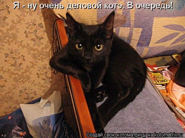 Котоматрица: Я - ну очень деловой котэ. В очередь!