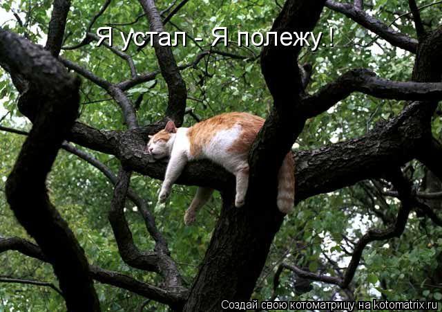 Котоматрица: Я устал - Я полежу.!