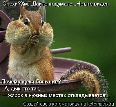 Котоматрица: Орехи?Хм...Дайте подумать...Нет,не видел. Почему щеки большие?А, дык это так,жирок в нужных местах откладывается... А, дык это так, жирок в нужны