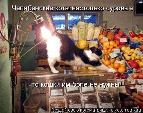 Котоматрица: Челябенские коты настолько суровые, что кошки им боле не нужны!