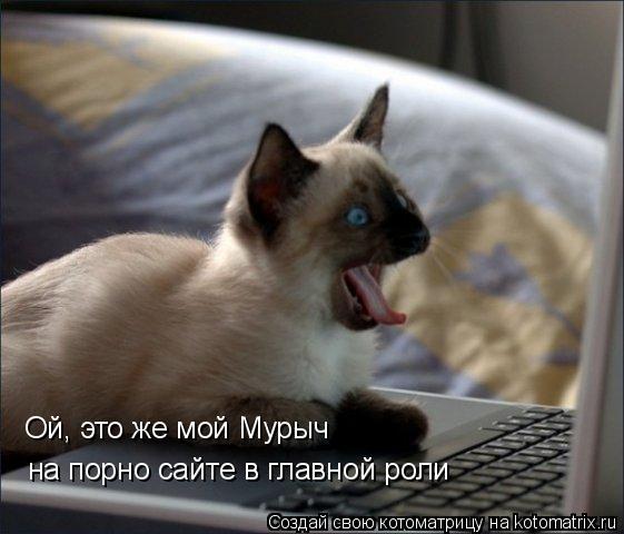 Котоматрица: Ой, это же мой Мурыч  на порно сайте в главной роли