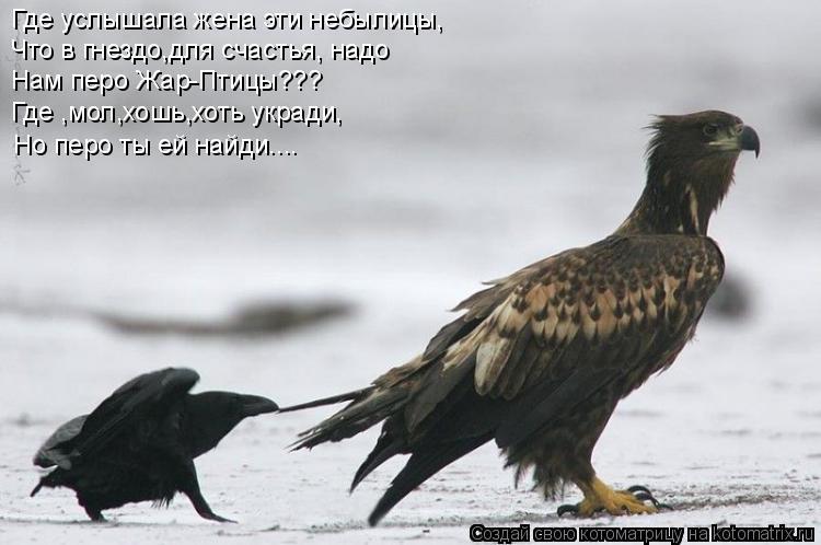 Котоматрица: Где услышала жена эти небылицы, Что в гнездо,для счастья, надо Нам перо Жар-Птицы??? Где ,мол,хошь,хоть укради, Но перо ты ей найди....