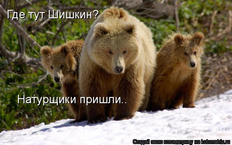 Котоматрица: Где тут Шишкин? Натурщики пришли..