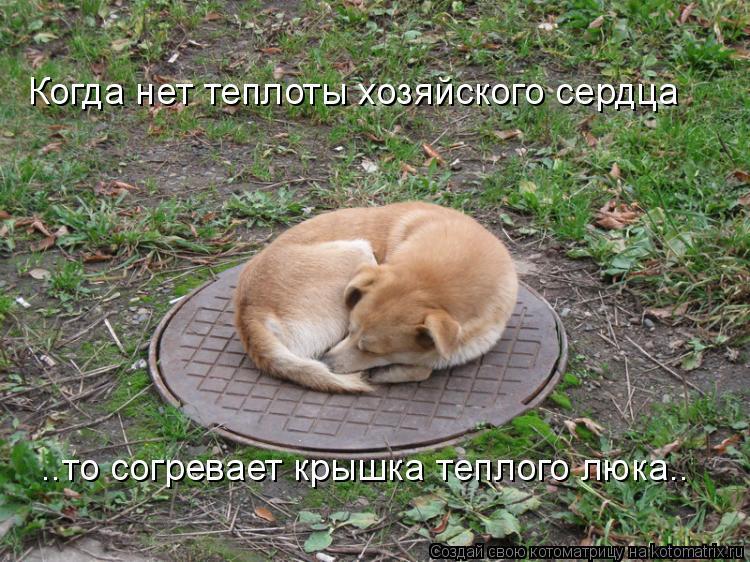 Котоматрица: Когда нет теплоты хозяйского сердца ..то согревает крышка теплого люка..