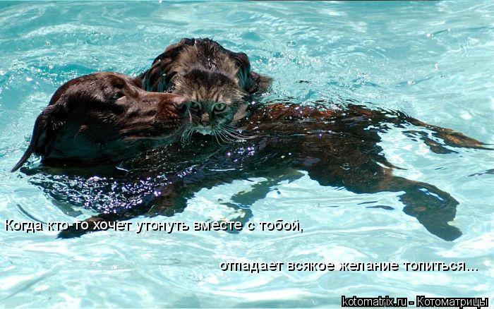 Котоматрица: Когда кто-то хочет утонуть вместе с тобой, отпадает всякое желание топиться...