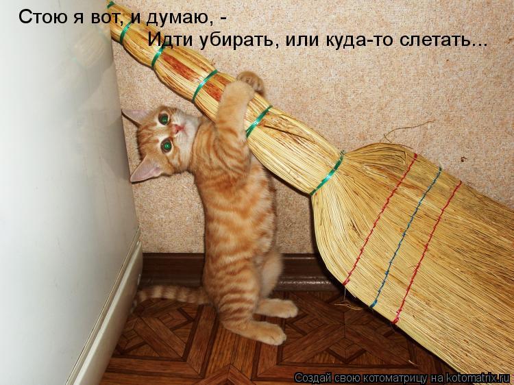Котоматрица: Стою я вот, и думаю, -  Идти убирать, или куда-то слетать...