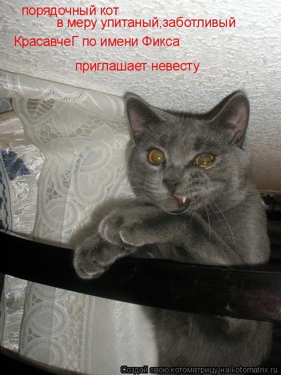 Котоматрица: порядочный кот в меру упитаный,заботливый КрасавчеГ по имени Фикса приглашает невесту