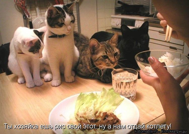 Котоматрица: Ты хозяйка ешь рис свой этот, ну а нам отдай котлету!