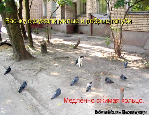 Котоматрица: Ваську окружали милые и добрые голуби Медленно сжимая кольцо...